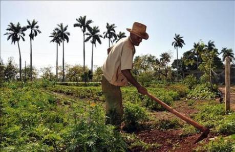 Un paysan cubain